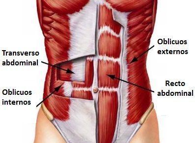 Musculatura abdominal (2)